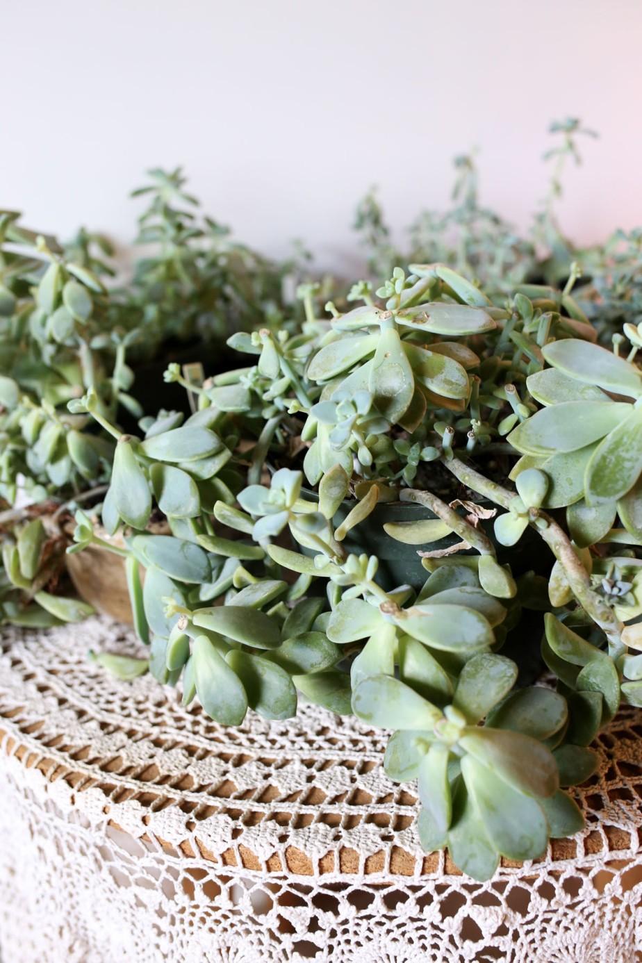 flourishflowers10